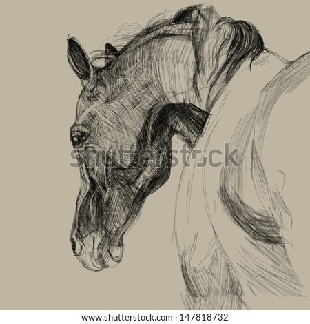 Drawing portrait of horse. One of step