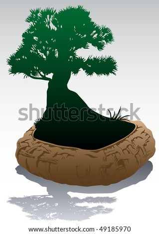 drawing small Japanese tree in ceramic pot