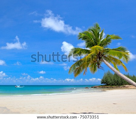 Dream beach with palm tree over the sand
