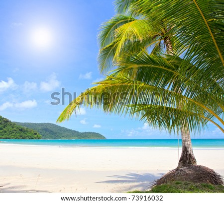 Dream beach with palm trees and white sand. Luxury vacations in summer nature.