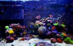 Dream saltwater coral reef aquarium tank