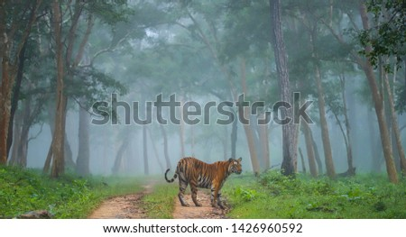 Dream- untimely rains of the October had spells within them,the ever enchanting kabini,(karnataka) was transformed into a fairy land these majestic beings took guard of this land. Zdjęcia stock ©
