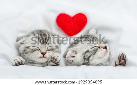 Dreaming kittens sleep with heart on a bed under warm white blanket. Valentines day concept. Top down view Stock fotó ©