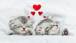 Dreaming kittens sleep with hearts on a bed under warm white blanket. Valentines day concept. Top down view
