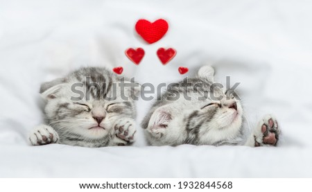 Dreaming kittens sleep with hearts on a bed under warm white blanket. Valentines day concept. Top down view Stock fotó ©
