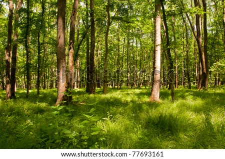 Dreamlike forest landscape with green plants