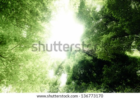 Dreams forest, tree in the forest with sunlight