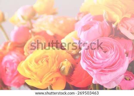dreamy abstract photo of flower with pastel tones. cross process effect