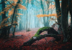 Dreamy autumn forest in blue fog. Colorful landscape with beautiful enchanted trees with orange foliage and red leaves on the branches. Amazing scenery with mystical foggy forest. Fall colors. Nature
