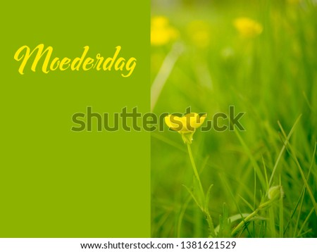 Dreamy buttercup image for Mothers Day with the Dutch word Moederdag for Mothers Day. A field of flowers with a solid text space.  #1381621529