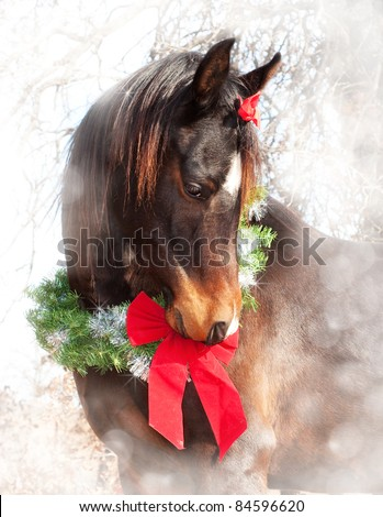 Stock Photo Dreamy Christmas image of a dark bay Arabian horse wearing a wreath and a bow