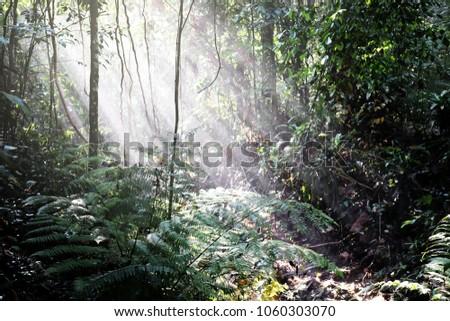 Dreamy crepuscular sunshine illuminating a green jungle floor.  #1060303070