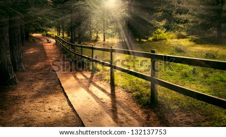 Dreamy enchanting path in the forest with a bench in the distance and welcoming beams of light shining #132137753