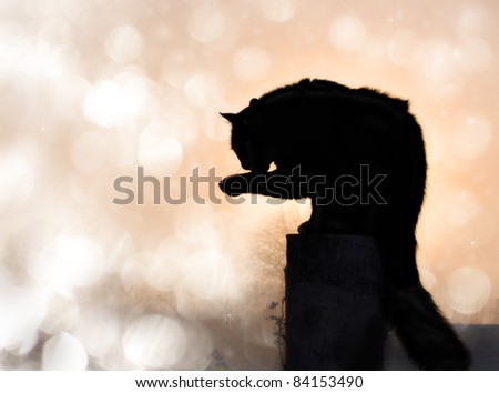Dreamy image of a black long haired cat in silhouette washing his paw