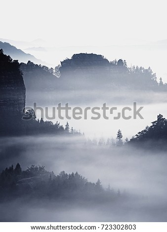 Dreamy landscape lost in thick fog. Fantastic morning glowing by gentle sunlight, foggy valley.  Blurred Background. #723302803
