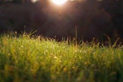 Dreamy lush green grass on meadow with drops of water dew sparkle in morning light, spring summer outdoors close-up, dreamy early morning sunrise