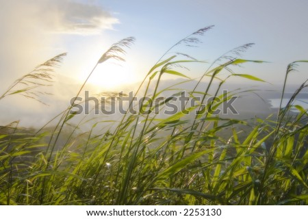 dreamy shot of blades of grass blowing in the wind against a rising sun over mountains #2253130