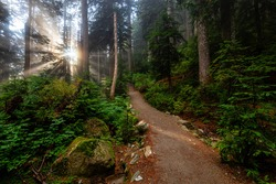Dreamy View of the Sunrays in a Rainforest during a sunny and foggy day. Hiking Path Trail in the Woods. Taken in Cypress Provincial Park, West Vancouver, British Columbia, Canada. Nature Background
