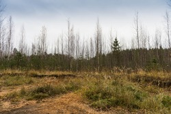 Dreary autumn landscape with forest. In the woods in November