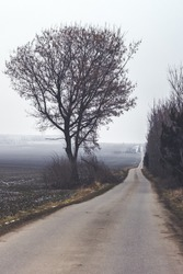 Dreary, Lonely Country Road and Tree in Winter in near Austerlitz, Moravia, Czech Republic, A Moody Landscape in Central Europe
