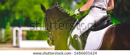Dressage horse and rider in white uniform closeup. Horizontal banner for website header design. Equestrian sport competition, copy space. Сток-фото ©