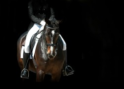 dressage horse portrait before start against black background