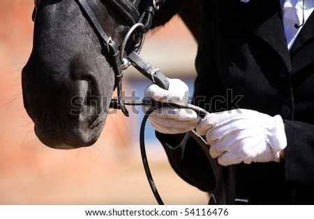 dressage horse, white gloves