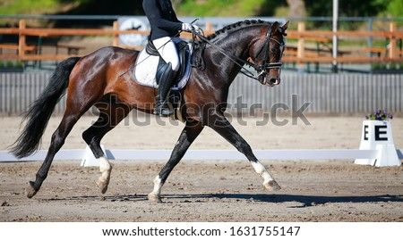Dressage horse with rider during a dressage test in a strong trot with a stretched front leg. Stock fotó ©