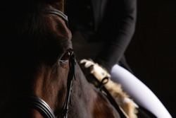 Dressage horse with rider in LowKey technique, close-up of the horse's head in the eye cutout, but you can still see a section of the rider in the focus. Right side still space for text.