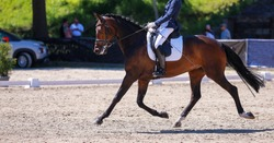 Dressage horse with rider trotting on a tournament photographed from the left.