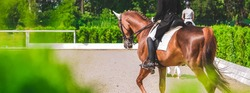 Dressage horses and riders in uniform. Horizontal banner for website header design. Equestrian sport competition, copy space.