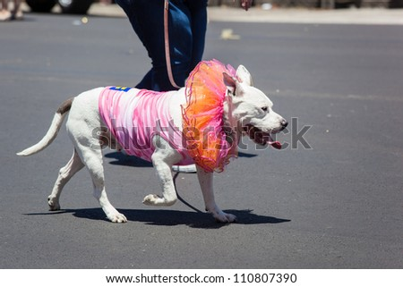 Dressed up dog at Gay Pride Parade