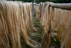 dried