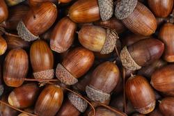 Dried acorns