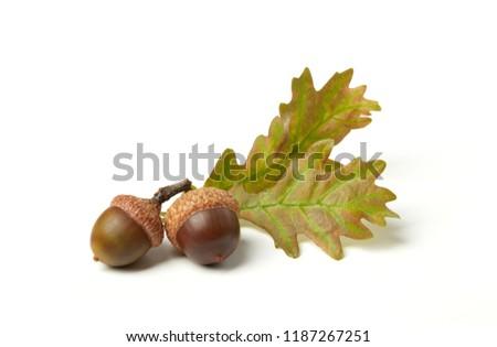 Dried acorns on white #1187267251