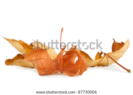 Dried autumn leaves isolated on white background - stock photo