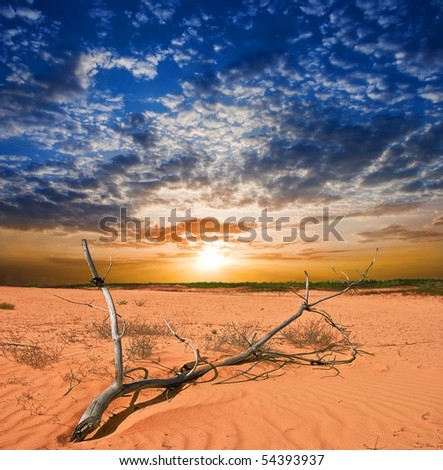 dried branch in a desert by a sunset