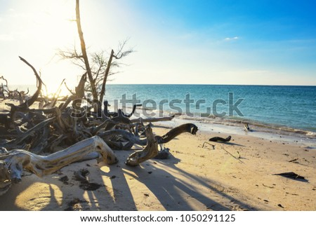 Dried branches with backlight on the beach of Cayo Jutias near Vinales (Cuba) #1050291125