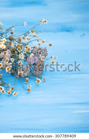 Dried chamomile flowers. Beautiful dried flowers on blue wooden background.