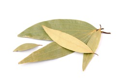 Dried Cinnamomum Tamala (Indian Bay Leaf) Leaves Isolated on White Background