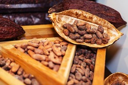 Dried cocoa beans are displayed in a shop window. Ingredient for the production of chocolate and other culinary products. Close-up
