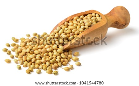 dried coriander seeds in the olive wood scoop, isolated on white