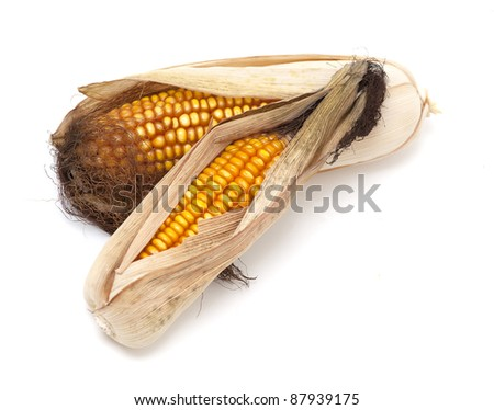 dried corn cobs