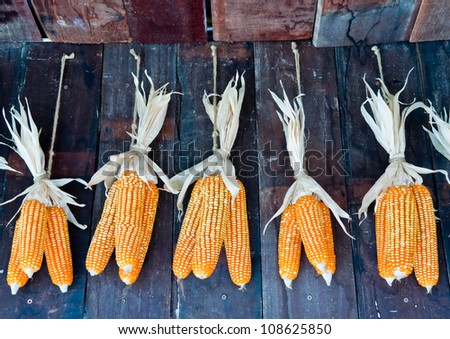 Dried corn hung on the wall.