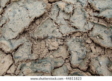 Dried Cracked Soil