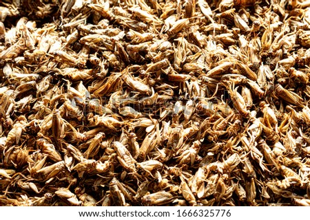 Dried crickets (Acheta Domesticus) closeup. Stock photo ©