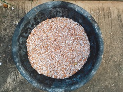 Dried eggshell crush to prepare and mix soil, fertilize plants