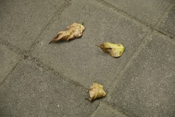 dried fallen leaves on the ground
