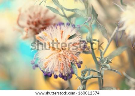 dried flower bud close up