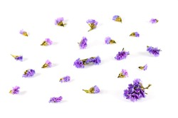 Dried flowers and dried leaves, both small and large, are placed on a white background, designed to be well spaced apart.